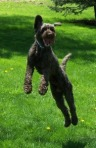Kodiak Jumping
