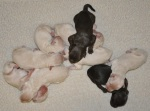 Meeka's Puppies